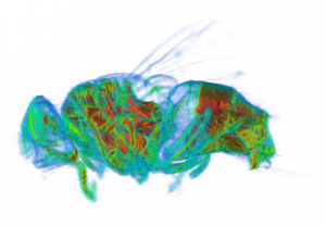 ASI spectral x-ray of fly
